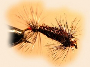 caterpillar-001