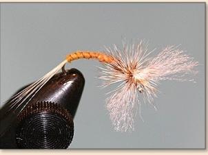 flat-spent-spinner-013