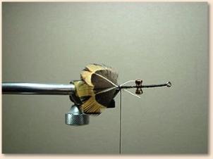 hummingbird-004