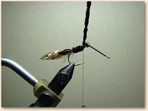 hummingbird-007