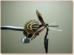 hummingbird-008
