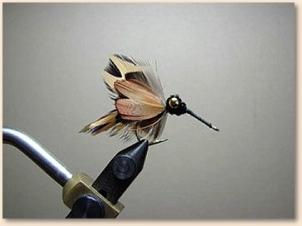 hummingbird-010