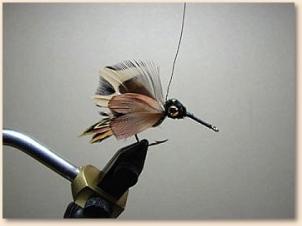 hummingbird-011
