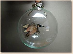 hummingbird-013