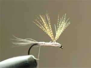 light-hendrickson-005