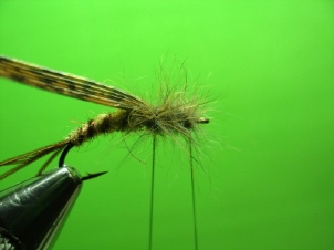 mayfly-nymph-007