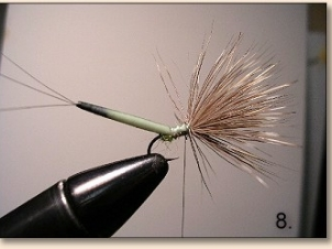 porcupine-008