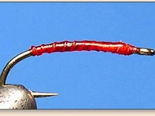 red-thread-larva-001