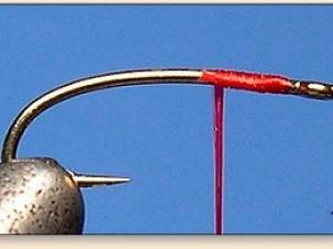 red-thread-larva-002