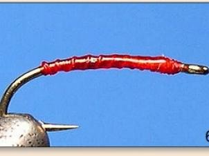 red-thread-larva-007