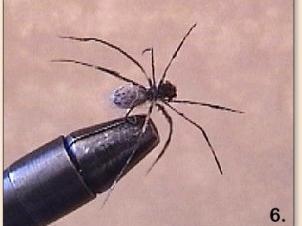 spider-007