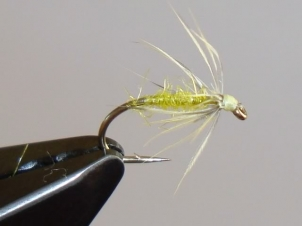 yellow-sally-wet-001