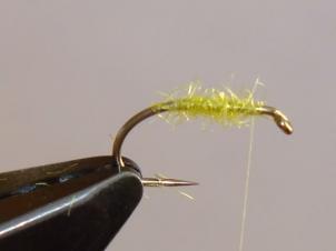 yellow-sally-wet-004