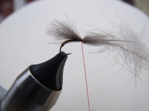 amu-liffey-special-emerger-004