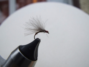 amu-liffey-special-emerger-007