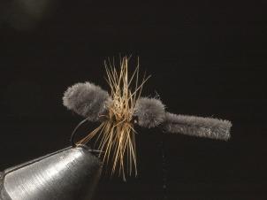 ant-008