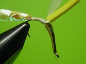 emerging-ephemerella-invaria-007