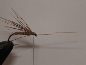 everybodys-caddis-007