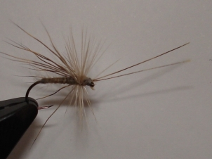 everybodys-caddis-010