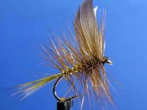 wickhams-fancy-dry001