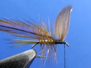 wickhams-fancy-dry011