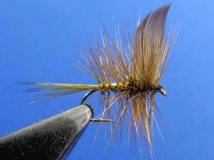 wickhams-fancy-dry013