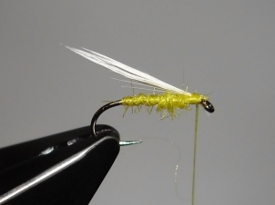 yellow-sally-dry-007