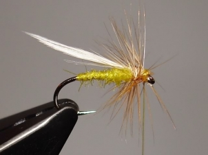yellow-sally-dry-008